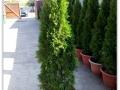plante-de-gradina-1