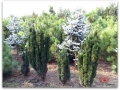 plante-de-gradina-10