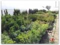 plante-de-gradina-11