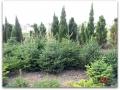 plante-de-gradina-14