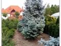plante-de-gradina-15