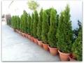 plante-de-gradina-2