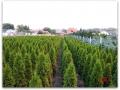 plante-de-gradina-22