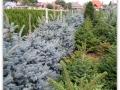plante-de-gradina-24