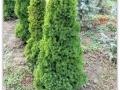 plante-de-gradina-4
