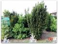 plante-de-gradina-5