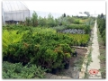plante-de-gradina-7