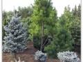 plante-de-gradina-9